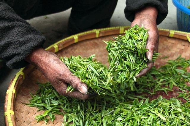 du thé vert